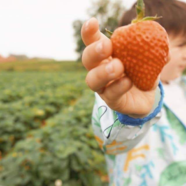 7 best places for fruit-picking in the UK