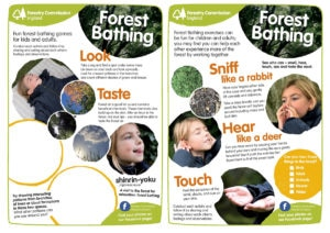More Brilliant Autumn Activity Sheets From The Forestry Commission